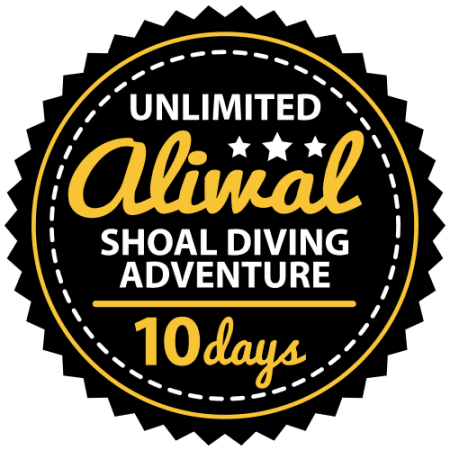 Unlimited Aliwal Shoal Adventure