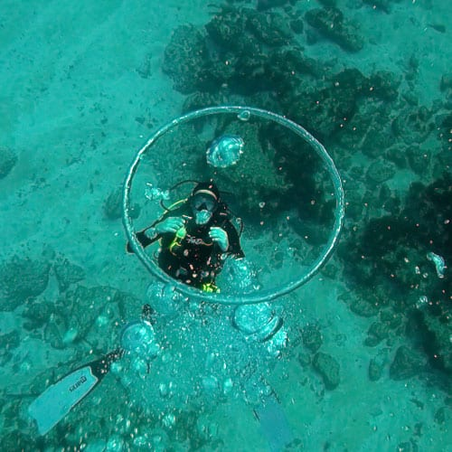 Diving Courses and Internships