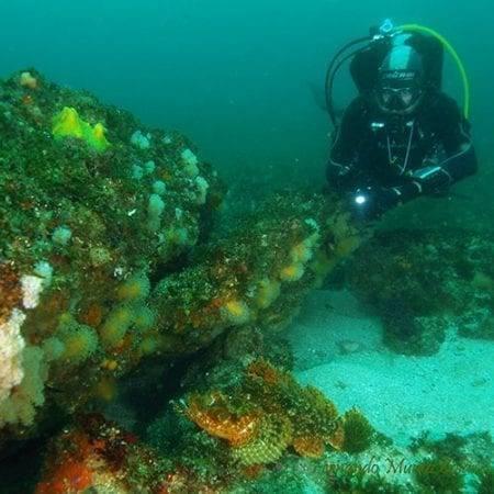 Ivan Hernandez - Reef Diving