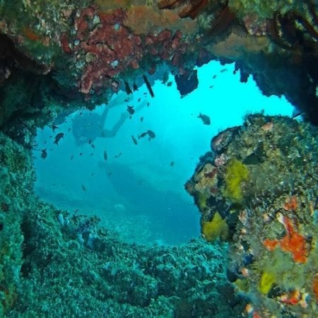Aliwal Shoal Reef Diving
