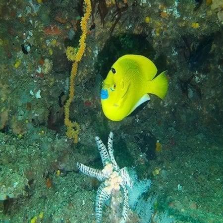 Marine Life Aliwal Shoal