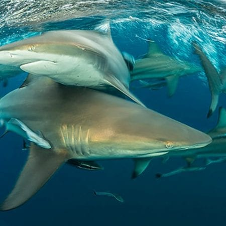 Cageless Snorkel