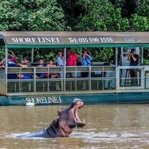 Hippo & Croc River Cruise